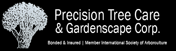 Precision Tree Care
